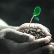 Živnosti - rozdělení a jak je získat
